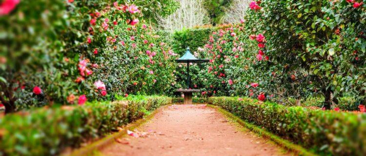 【入居者アップ】賃貸物件の庭の手入れは業者に依頼がおすすめ!